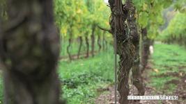 Der Wein und Trier